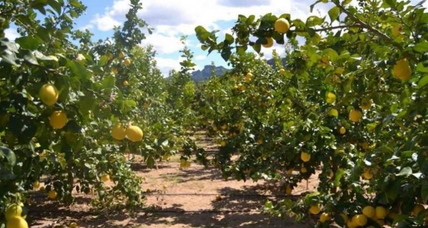 La barrera fitosanitaria de La Florida ayudará a prevenir el HLB