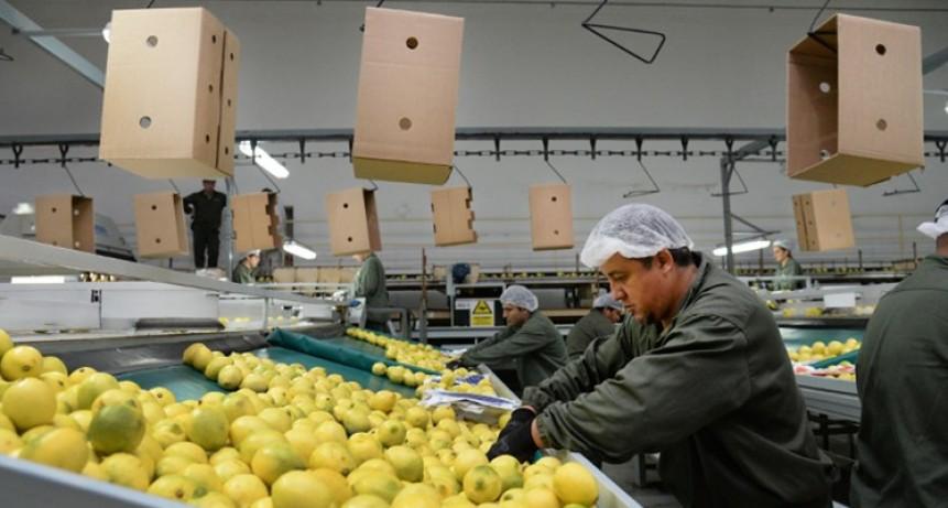 El limón tucumano diversifica mercados con la apertura de Colombia