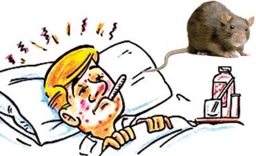 Advierten sobre la Leptospirosis ¿Qué es? ¿Cómo se previene?