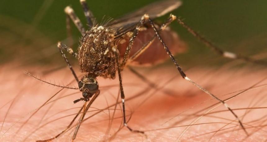 Consejos para prevenir el Dengue, Zika y Chikungunya