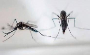 Corrientes registra 423 casos de dengue, el 57 por ciento de ellos autóctonos