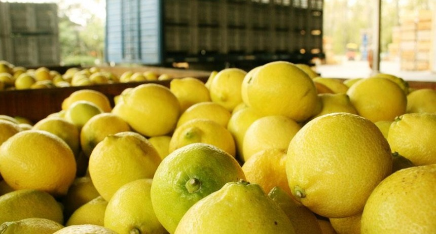 Inician las exportaciones de limón a Estados Unidos