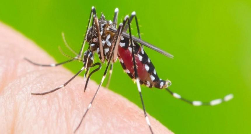 En Tucumán suman 1019 casos de Dengue