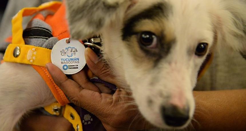 Tucumán Mascota celebrará el Día del Perro en Canal 10