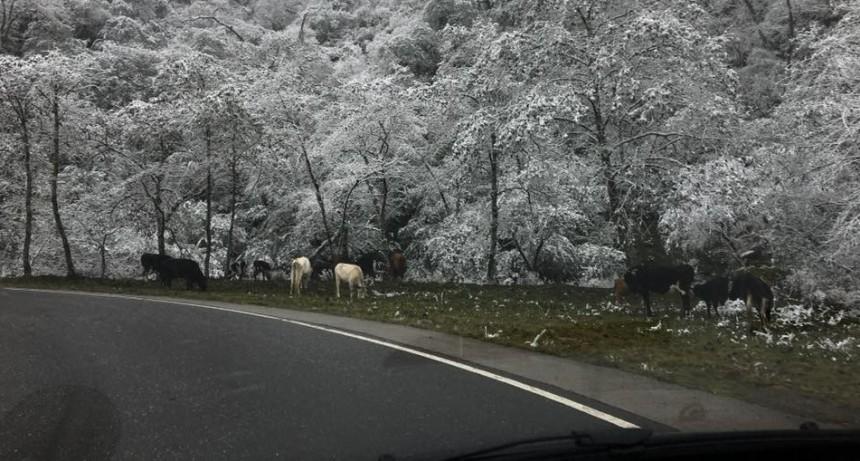 Las nevadas en la zona de alta montaña dificultan el tránsito