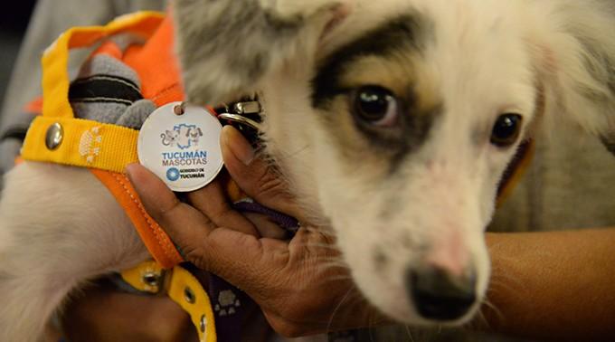 Tucumán Mascota llegó a las 1000 castraciones