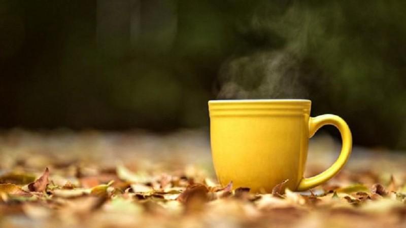 ¿Por qué se toma té de ruda el 1 de agosto?
