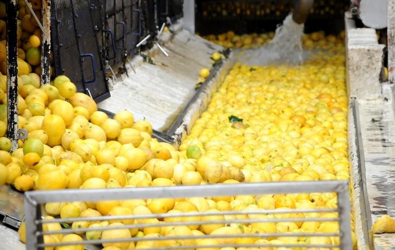 Tucumán enviará 20.000 toneladas de limón a EEUU en 2018