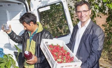 Jornaleros de Lules se convirtieron en productores de frutillas