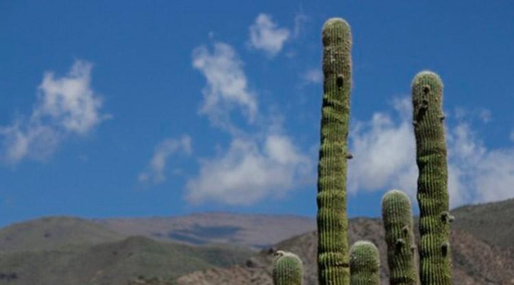 El Consejo Federal de Turismo debatirá en Tucumán