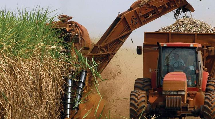 Tucumán será sede del Congreso Mundial de Caña de Azúcar