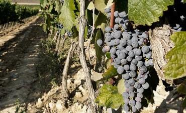 Productores tucumanos criticaron la suba de impuestos al vino