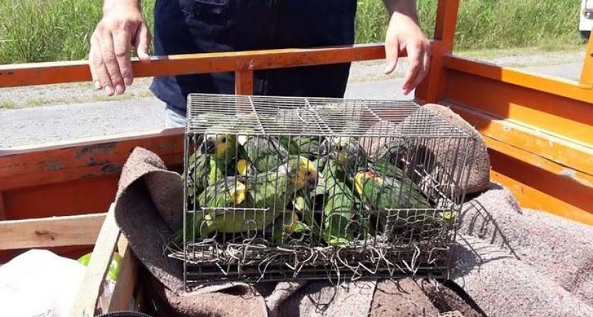 Abren canales para de denunciar el comercio ilegal de aves