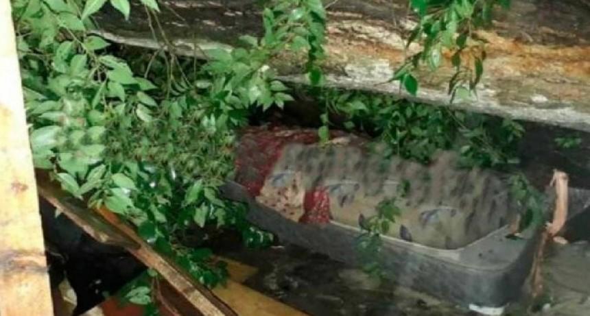 Temporal en La Plata: dos muertos tras la caída de un árbol